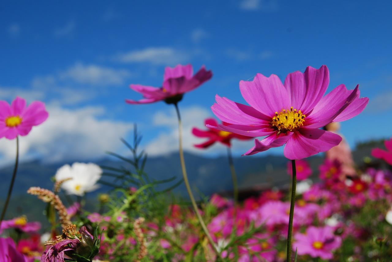 Best Places In South Africa To See Flowers This Spring Citiliner